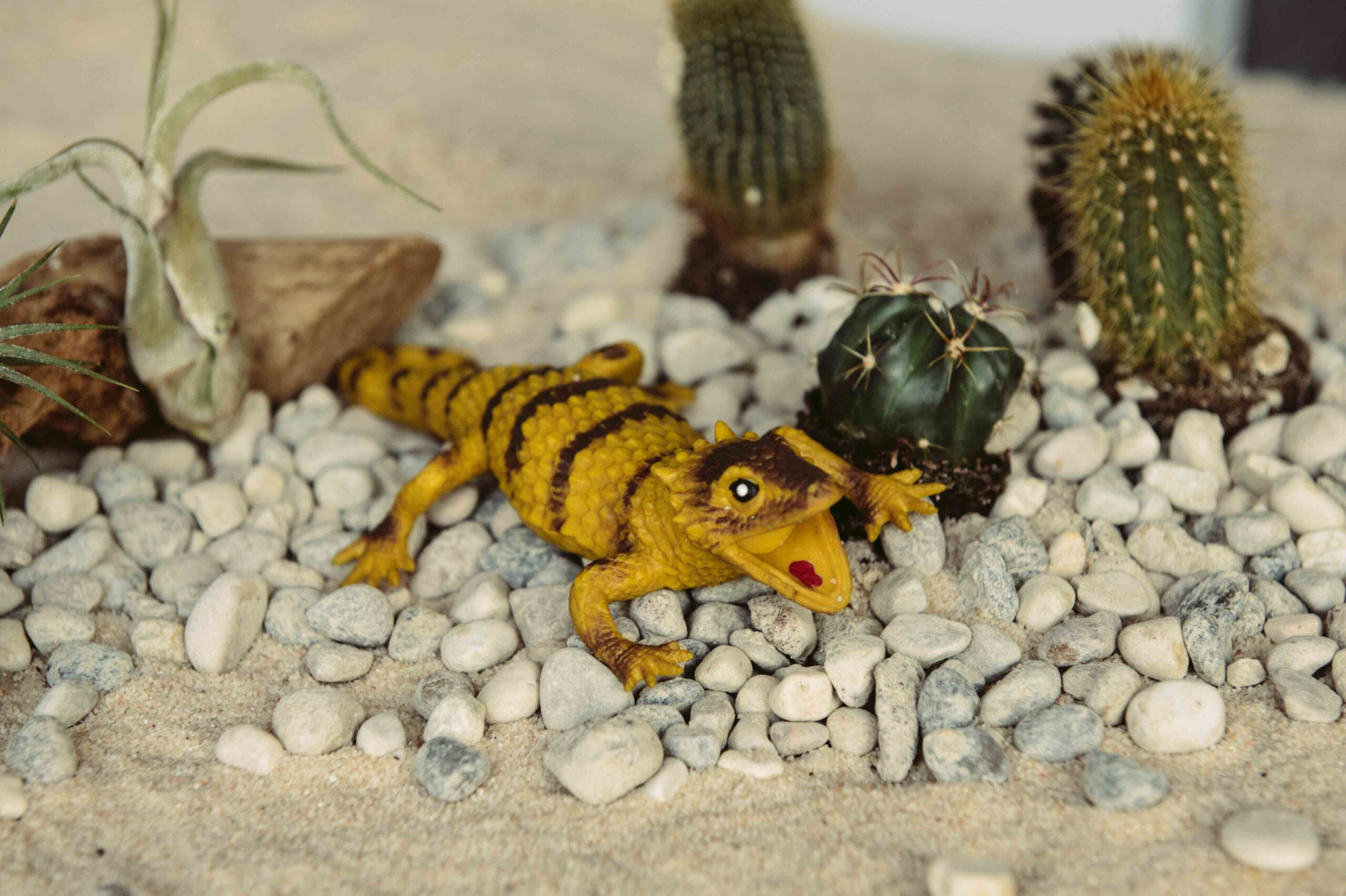 Sungazed Lizard: lucertola giallobruna rivestita da placche appuntite