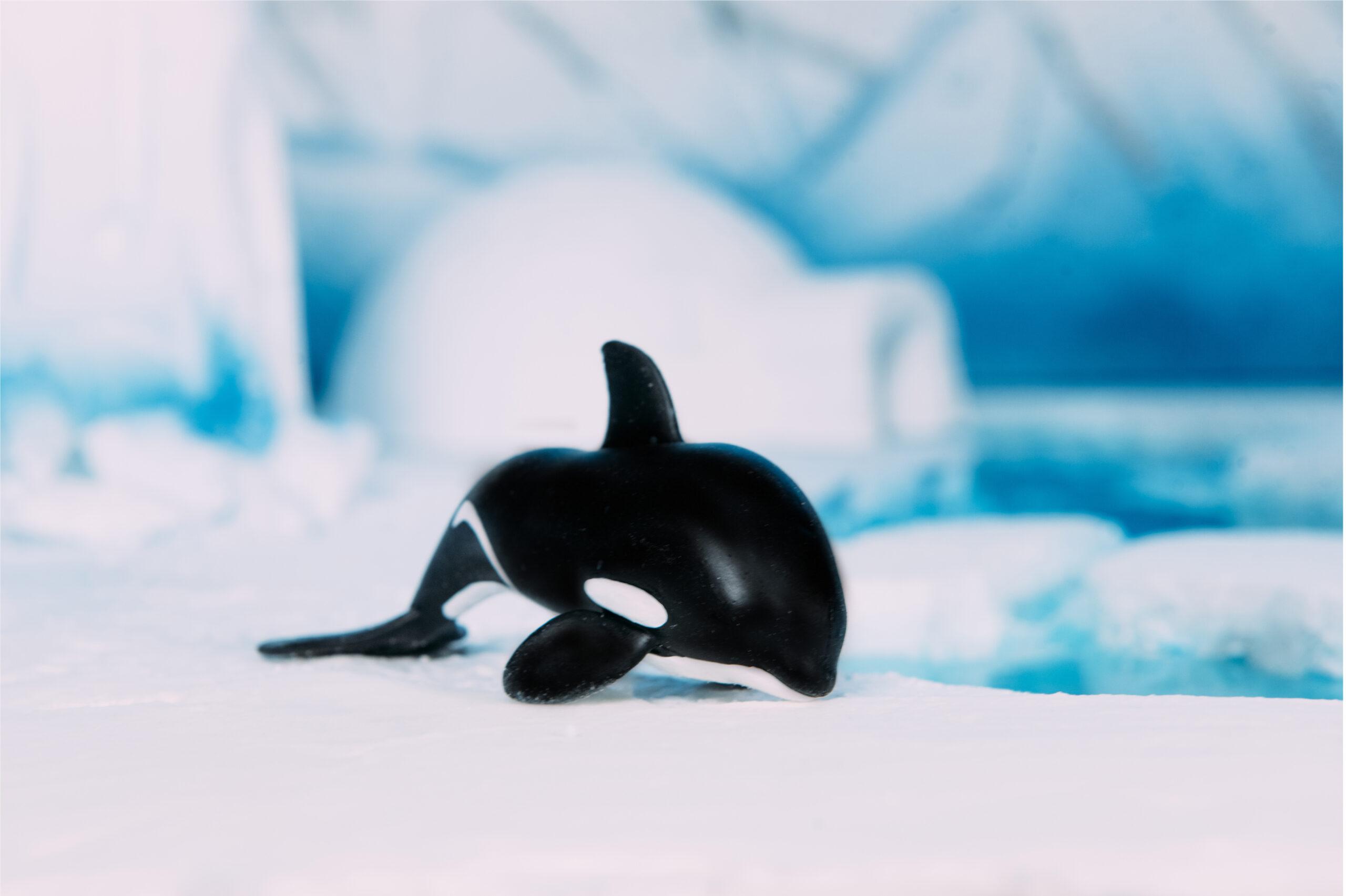 CHIMPANZEE_ANIMALPEDIA_L'ERAPOLARE_ORCA
